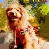 【ハロウィンコスプレ】ドラゴンボール超サイヤ犬でトリック・オア・トリート!