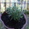 梅雨の花の湿度対策