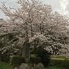春は遠くからけぷって来る(2017年4月9日)