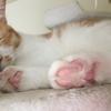 猫の前足と肉球祭り!