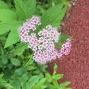 plant-raspberrypi3のブログ