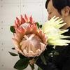 大きなお花が届きました~キングプロテア~