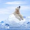 夏場に降りかかる子供の水筒に入れる氷問題!これで解決☆