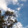 ワライカワセミときれいな鳴き声の鳥と空飛ぶカルメン