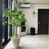 【狙い目】沖縄のふるさと納税で観葉植物を!