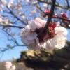 和歌山県岩出市にある【和歌山県植物公園 緑花センター】へ行って来た!