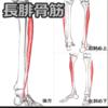 【前十字靭帯術後15日目】外は台風でもリハビリ。今日から2分の1過重…長腓骨筋は大切なインナーマッスル!!