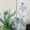 幸せな環境に置かれた植物は伸び伸びと育つ☆全てにおいて☆
