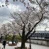 お花見@隅田公園・2021年3月25日
