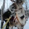 真冬のフィンランド - NBE Finland -