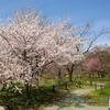 フォトウォーク in 京都府立植物園