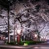2018年春 京都・高瀬川で夜桜を鑑賞