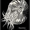 オウムガイをモチーフに立体感があるデザイン挑戦にした切り絵アート作品『Nautilus』