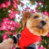 2021年【豊科近代美術館バラ園】見頃を迎えたよ!愛犬とのお散歩に💛