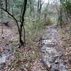 大岩ヶ岳から丸山湿原へのハイキング(その8)川下川ダム~東山橋間の登山道