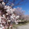 春真っ盛りな山梨行ってきた。