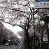 国立の桜通りをブラブラして谷保の駅近でかぼちゃのケーキを食べた