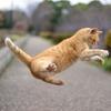 猫の運動能力