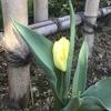 明日は春分の日。。^^