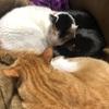 猫にコタツを占領される。
