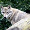 人狼ゲーム 人狼の役割や立ち回りのコツまとめ