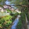 相沢川を歩く