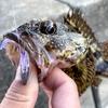 【家島諸島】南兵庫では珍しい離島は根魚釣りのパラダイスだった!