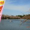 開幕!弘前桜祭り 3(屯所のこと)