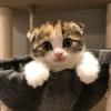猫アイドル総選挙