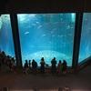 2月土曜日の葛西臨海水族園は、そこまで混雑していませんでした!