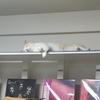 棚で眠るライチ