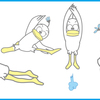 福岡:男子新体操九州講習会1/28 / 福岡WS2/25 日曜開催! 脳体トレWS:カラダの使い方&楽しいわかりやすい解剖学