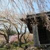 【プチ聖地巡り】長野県光前寺の枝垂れ桜に心を奪われる。