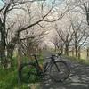 岐阜県輪之内町の桜トンネルはとっておき!(2018年4月)