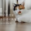 猫は自分の名前を聞き分けられる?