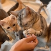 気になる「猫カフェ」(大宮・川口・池袋)をピックアップ!