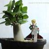 星の王子様とバオバブモドキ①, Adenium arabicum