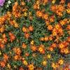 2-37   愛すべき花たち〜夏に向けて〜