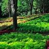 国営武蔵丘陵森林公園 〇~17キロものサイクリングコースがある国営公園~