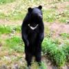 登山中、熊に遭遇したら。そしてその対策。