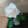 【阿部派一刀流  阿部吉宏の一刀斎武録】    ≪人 花を見  花 笑う≫