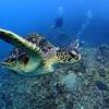 【徹底解説】海洋プラスチック問題の原因と対策【日本人は何をすべきか】