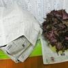 赤紫蘇の灰汁ぬき&発色
