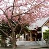 桜や梅をモチーフとした春らしいお守り