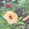 夏に向けて咲いている花たち。ガーデニング初心者でもキレイに咲かせることができる身近な花(黄色い花編)。