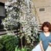 NY突然 春