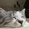猫だけのお留守番はどのくらいまで平気?旅行のときはどうする?