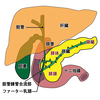 【基礎から学ぶ】膵臓のホルモン【解剖生理学】