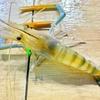 【完全保存版】タイでエビ釣り チェンマイのエビ釣り堀情報まとめ。