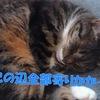 猫が寄り添って寝る理由5つ【寄りかかって一緒に寝る人の選び方】